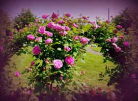 fleurissement-municipal-2012_2